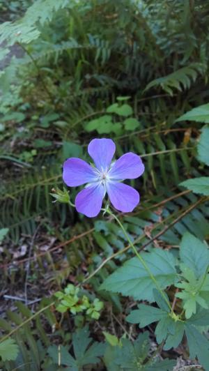 花, 紫色, 紫色的小花, 自然, 花香, 植物, 绿色