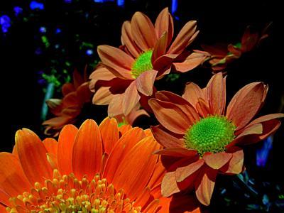花瓣, 春天, 花