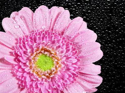 菊花, 花, 自然, 植物, 植物区系, 开花, 绽放