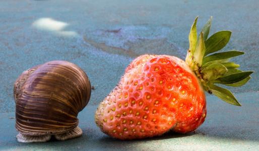 草莓, 蜗牛, 吃, 壳, 食品, 水果, 自然