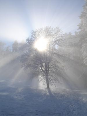冬日的阳光, 冬天, 太阳, 树, 雪, 阳光, 回光