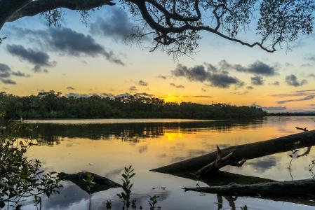 景观, 河, 日落, 树木, 反思, 自然, 现场