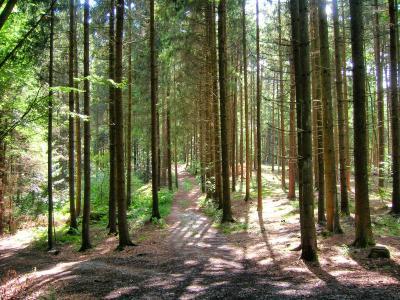 森林, 林间空地, 气氛, 巴伐利亚森林, 巴伐利亚, 自然, 树木