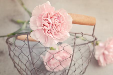 丁香, 花, 粉色, 粉红色的康乃馨, 花瓣, 切花, 购物篮