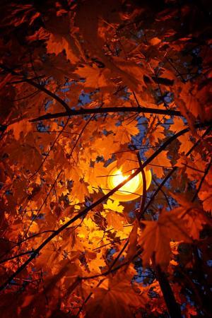 秋天, 叶子, 秋天的落叶, 木材, 光, 灯光