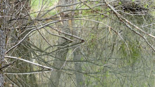 水, 自然, 池塘, 沼泽, 景观, 几点思考, 分支机构