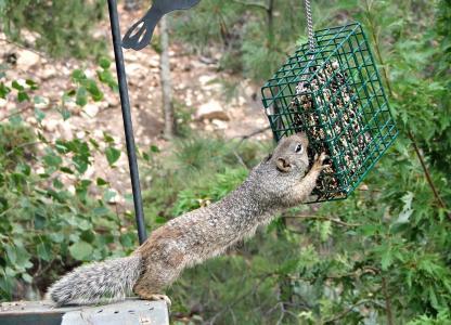 松鼠, 啮齿类动物, 喂养, 动物, 野生动物, 哺乳动物, 自然