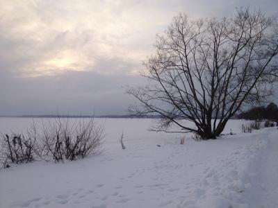 自然, 冬天, 瑞典, 雪, 树, 低温, 弗罗斯特