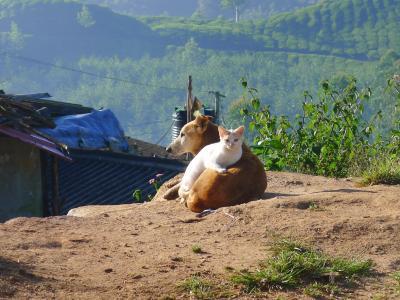 友谊, 猫, 狗, 动物, 农业, 农场, 自然