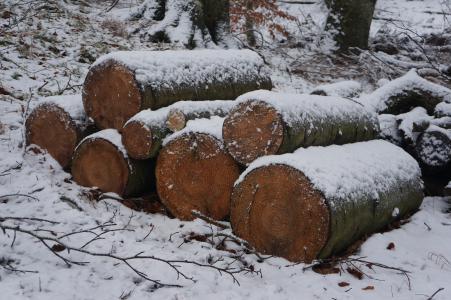 冬天, 木材, 森林, 自然, 日志记录, 雪