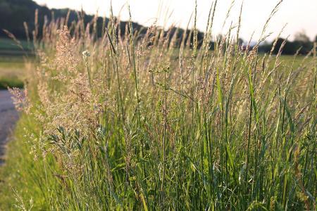 尖尖的花, 野生花卉, 关闭, 天然植物, 自然, 草, 草甸
