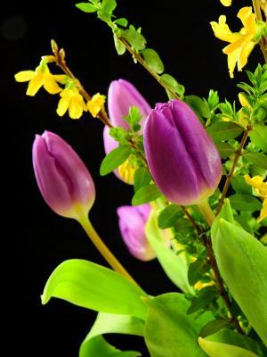 郁金香, 花, 开花, 绽放, 春天, 切花, 春天的花朵