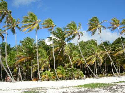 马提尼克岛, 棕榈树, 风, 海滩, 海, 夏季, 假日