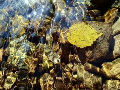 叶, 游泳, 水表面, 秋天, 自然, 植物, 水