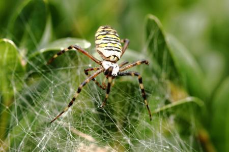 蜘蛛, 帆布, 蜘蛛网, 自然, 宏观, 蛛形纲动物, 的性质