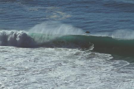 海豚, 海洋, 海, 水, 溅水, 波