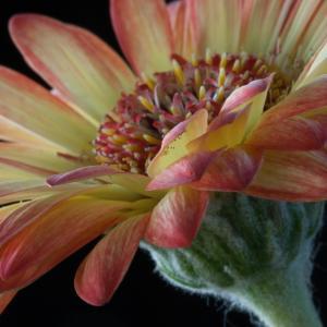 花香, 花, 自然, 植物, 夏季, 花卉设计, 花瓣