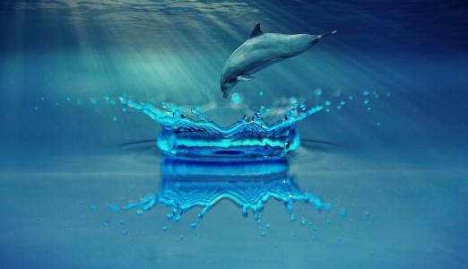 海豚, 动物, 海洋哺乳动物, 水, 海, 海洋, 游泳