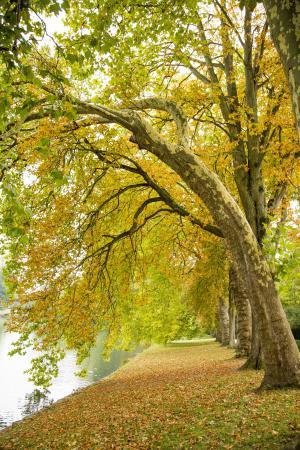景观, 美丽, 秋天, 落叶