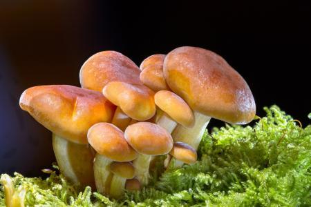 蘑菇, 木材的真菌, 海绵, 迷你蘑菇, 小蘑菇, 蘑菇组, 食品