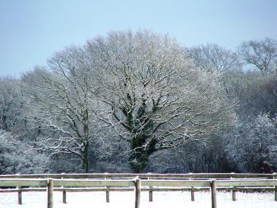 雪, 树, 肯特, 冬天, 英格兰, 自然, 字段