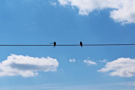 燕子, 双, 天空, 蓝色, 云彩, 飞, 心情