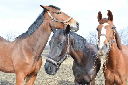 马, 野生, 动物, 电源, 户外