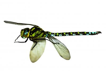 昆虫, 蜻蜓, 关闭, 宏观, 翼, 蓑, 分离