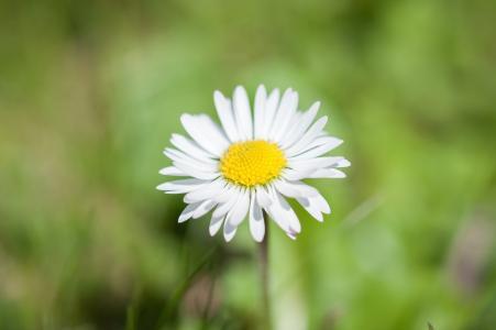 黛西, 花, 尖尖的花, 自然, 黄色, 白色, 开花
