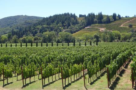 葡萄酒, 葡萄, 纳帕, 酒厂, 葡萄树, 葡萄园, 收获