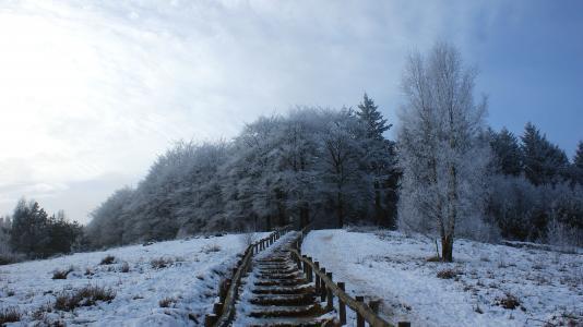 森林, 树木, 雪景, 步行路径, 陷阱, 冰, 雪