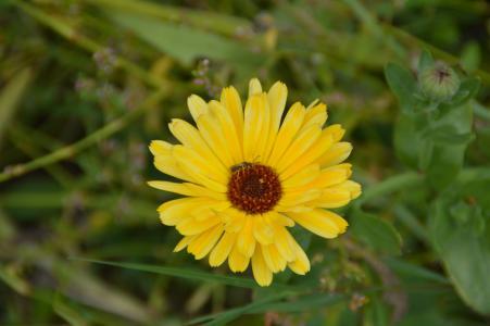 万寿菊, 花, 花园, 黄色, 自然, 植物区系, 开花