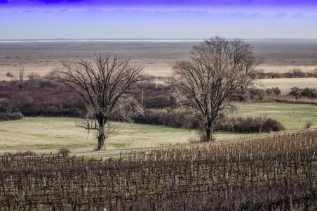 冬天, 匈牙利, 木材