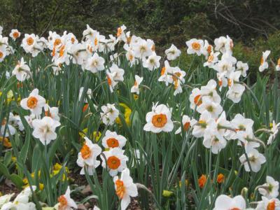 花, 字段, 春天, 领域的花, 自然, 花, 植物
