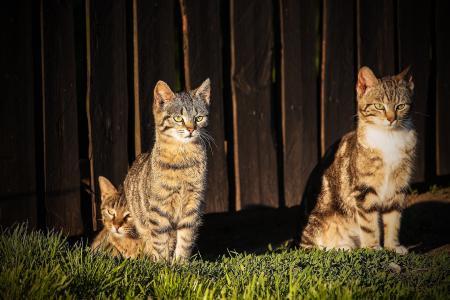 猫, 顶部猫, 宠物, 迷人的, 猫, 一只普通的猫, 小猫