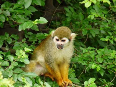 动物, 猴子, 绿色