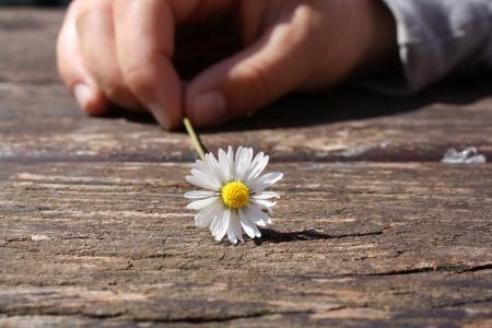 黛西, 花, 手, 连通性, 木材, 表, 运气