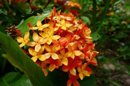 植物, 花, 橙色, 光明, 颜色, 自然, 花香