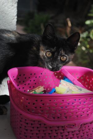 猫挂衣服, 猫衣服钉, 可爱的小猫, 可爱猫咪, 猫, 夹子, 小猫