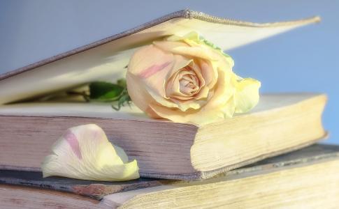上升, 书, 老书, 开花, 绽放, 罗森布拉特, 使用