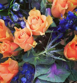 花, 玫瑰, 白菜, 绿色, 新鲜, 开花, 光明