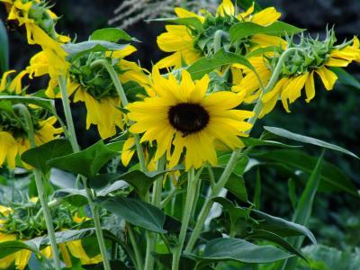 花, 植物, 绿色, 春天, 自然, 花香, 黄色