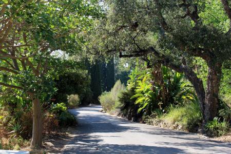 树, 自然, 叶子, 景观, 绿色, 松树, 普罗旺斯