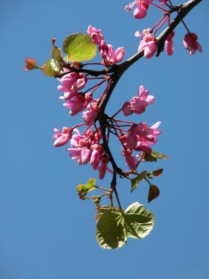 丁香, 花, 花园, 春天, 紫色
