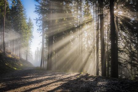 新光, 太阳, 雾, 天空, 日出, 光线, 光效果