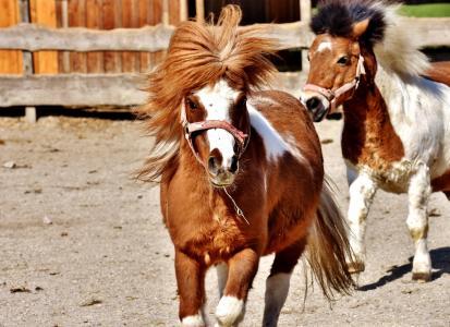 马, 戏剧, 有趣, 动物, 小马, 海马, 自然