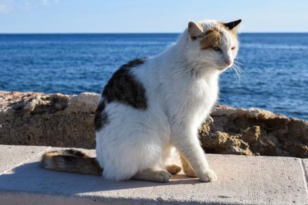 猫, 流浪, 动物, 可爱, 基蒂, 寻找, 可爱