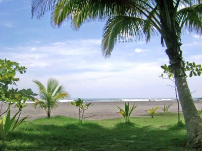 棕榈树, 天空, 地平线, 杏仁, 海滩, 哥斯达黎加
