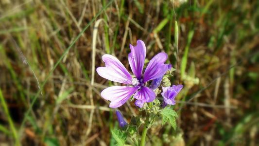 花, 丁香, 自然, 花, 蓝色, 详细, 花卉林