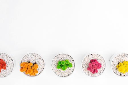 世界地球日, 仙人掌, 仙人掌, 多彩, 植物, 对齐, 在行